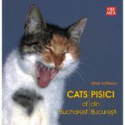 Pisici din Bucuresti